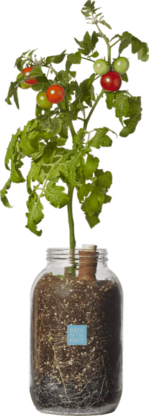 $7.50 for Back to the Roots® Self-Watering Planter (expiring on Sunday, 04/01/2018). Offer available at H-E-B, Whole Foods Market®, Sprouts Farmers Market.