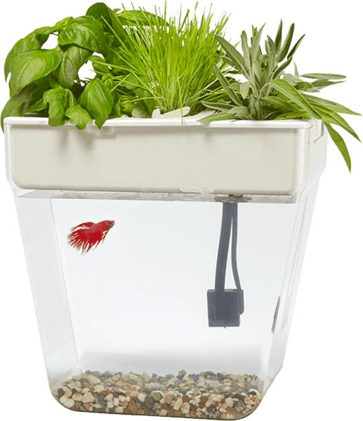 $20.00 for Back to the Roots® Water Garden Deluxe (expiring on Monday, 04/02/2018). Offer available at H-E-B, Home Depot.